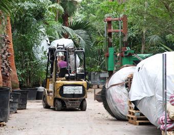 Verpakken van de planten en transport naar project